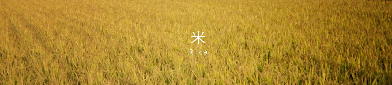 rice_visual